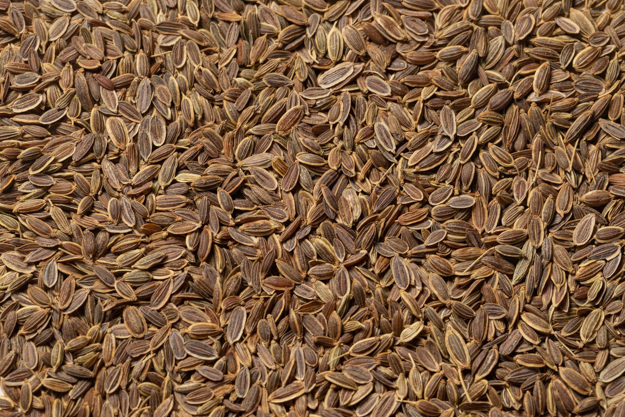 Whole Dill Seed (1 lb.)